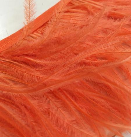 Orange ostrich feathers. Photo 5